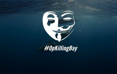 Anonymous Hackers Change OpKillingBay Tactics, Campaign Goes Global