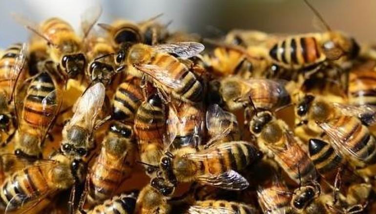 Hidden Bee miner spread via download drive-by download toolkit