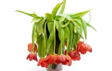 Magecart Delivers Malware to 1-800-FLOWERS