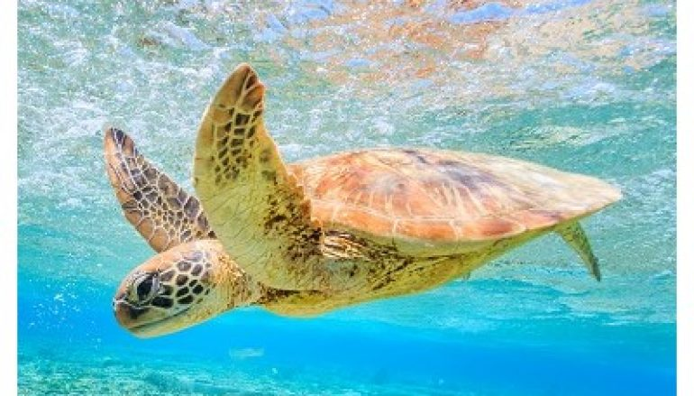 Sea Turtle DNS Hijackers Go After More Victims
