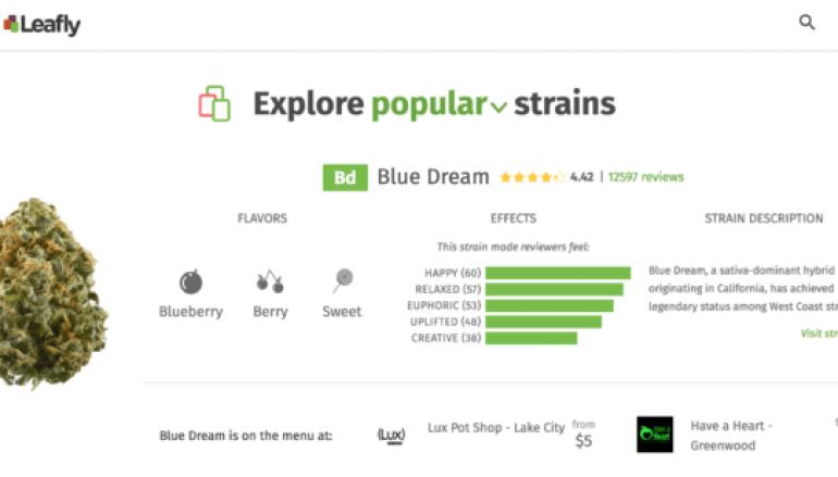 Leafly Cannabis Information Platform Suffered a Data Leak