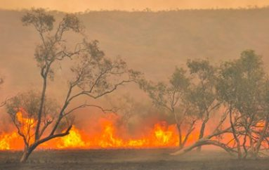 Aussie Bushfires Donation Site Hit by Magecart Thieves