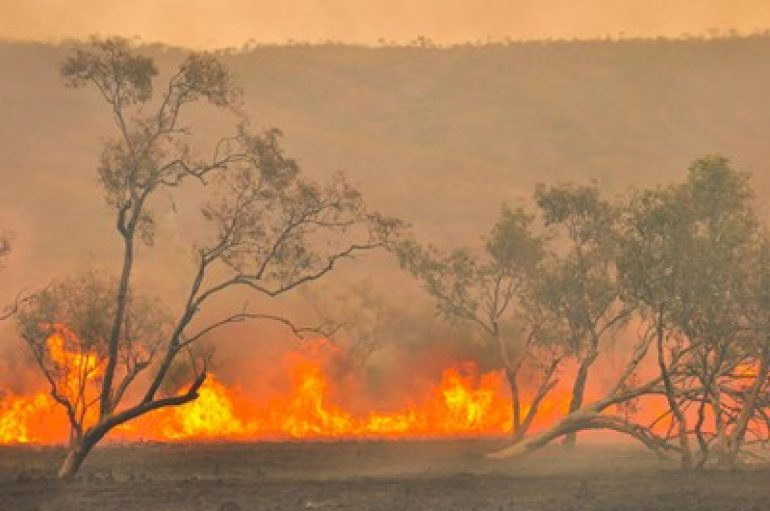 Aussie Bushfires Donation Site Hit by Magecart Thieves