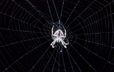 Pandemic Popularity Forces Dark Web Forums to Recruit