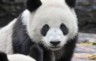 WatchGuard Completes Panda Acquisition